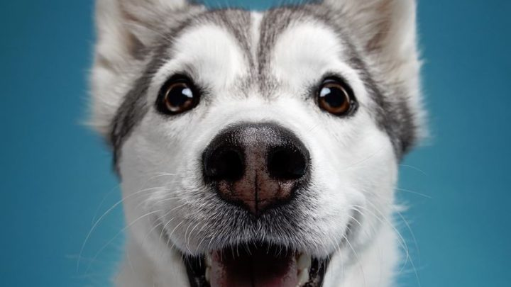 Viajar con mascotas en el coche: 7 consejos